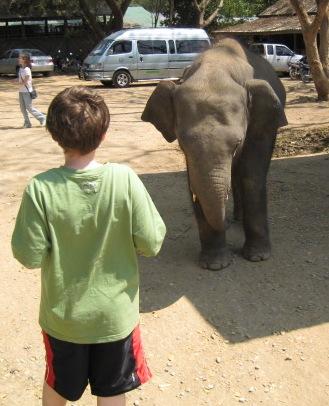 elephant-face-off.jpg