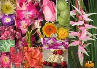 flowerskillz.jpg