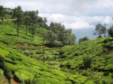glenmorgan tea estate (38)
